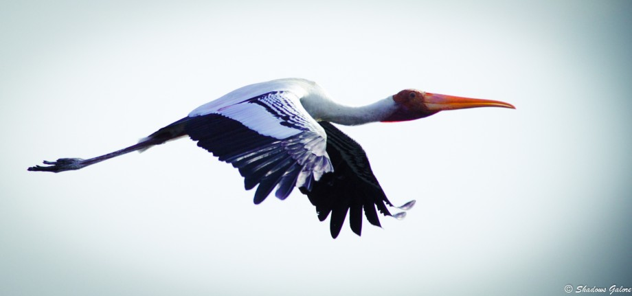 Vedanthangal - India's oldest bird sanctuary 1