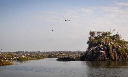 Vedanthangal – India's oldest bird sanctuary
