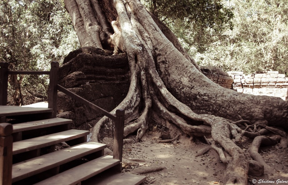 Backpacking across South East Asia -Ta Prohm, Angkor 1