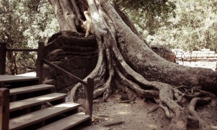 Backpacking across South East Asia -Ta Prohm, Angkor