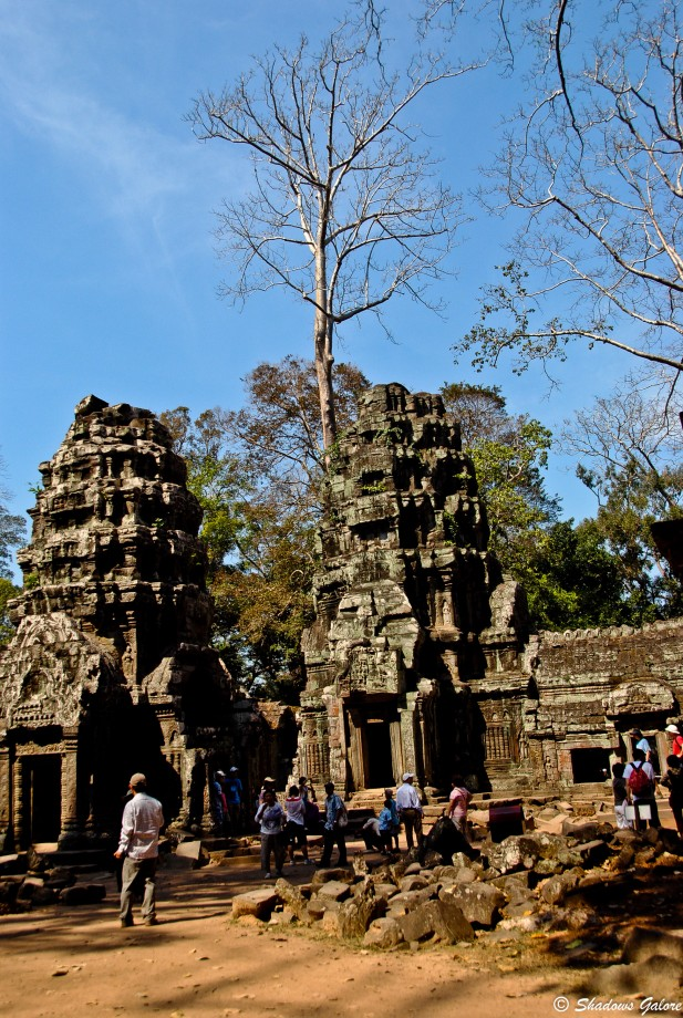 Backpacking across South East Asia -Ta Prohm, Angkor 3