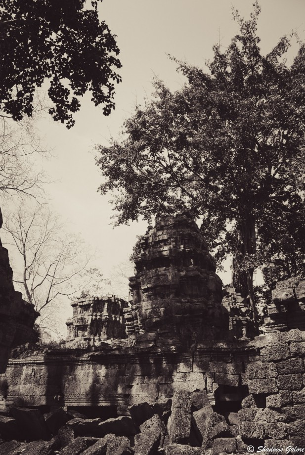 Backpacking across South East Asia -Ta Prohm, Angkor 2
