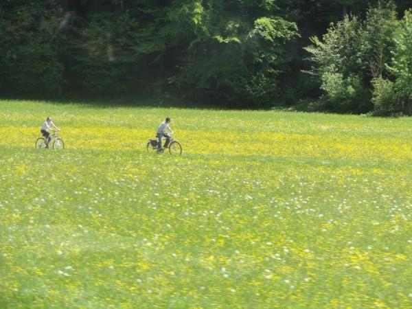 Cyclists enjoying a ride..