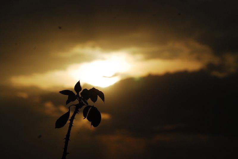 Myriad Moods of Nature 3