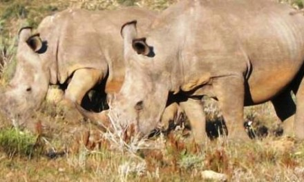 Choosing a family Safari in Africa