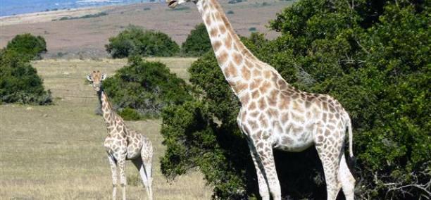 Choosing a family Safari in Africa 2
