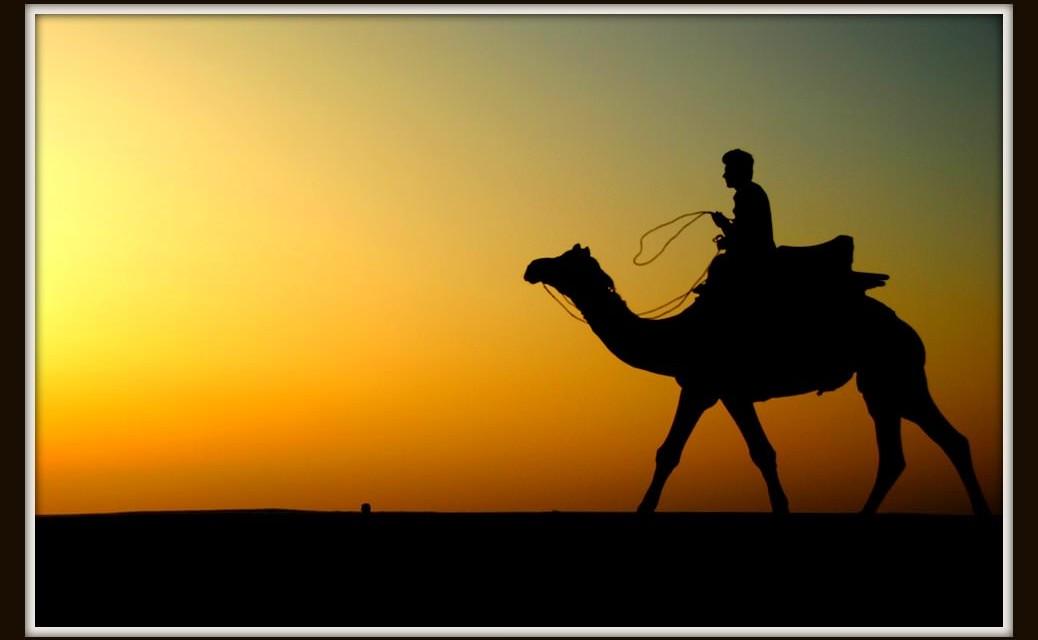 A Camel in Thar
