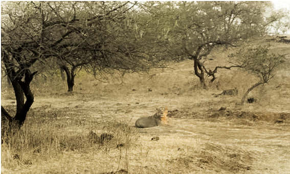 An Adventure at the Gir Forest National Park