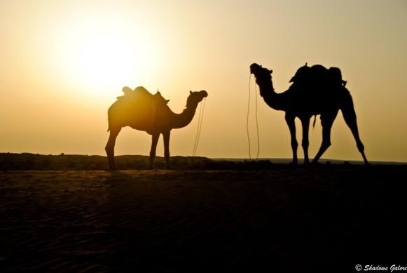 Thar-sunset