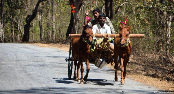 Horse Cart in Dandeli