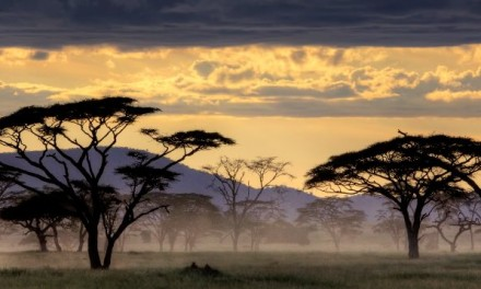 Experience the Serengeti National Park