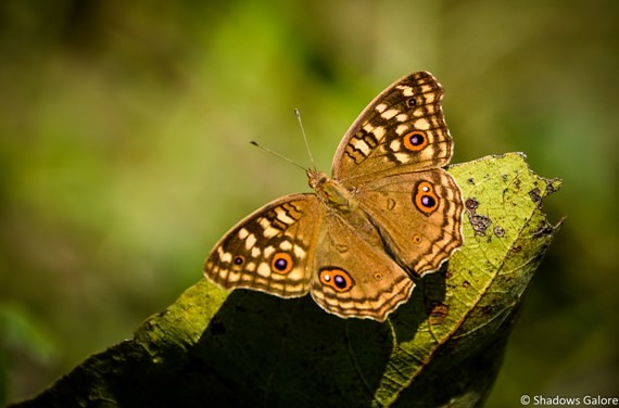 Butterflies and Insects-2