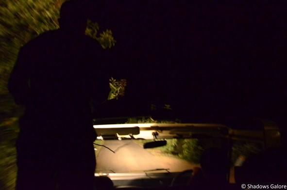 Night Safari-6