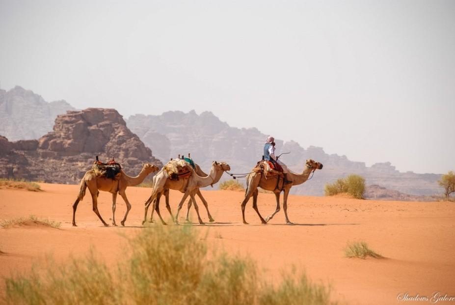 Wadi Rum 8
