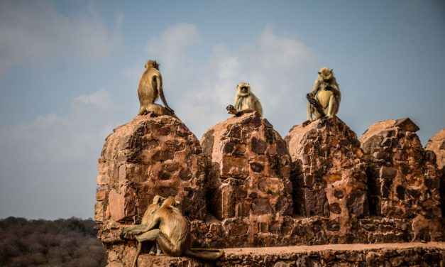 The Mighty Fort of Ranthambore