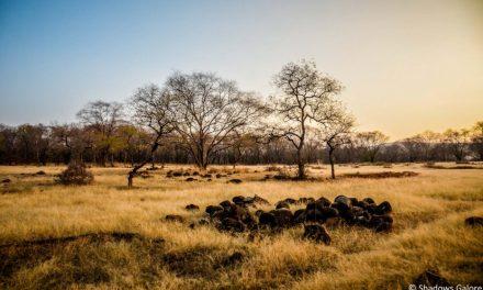 Jungle Safari in Ranthambore National Park