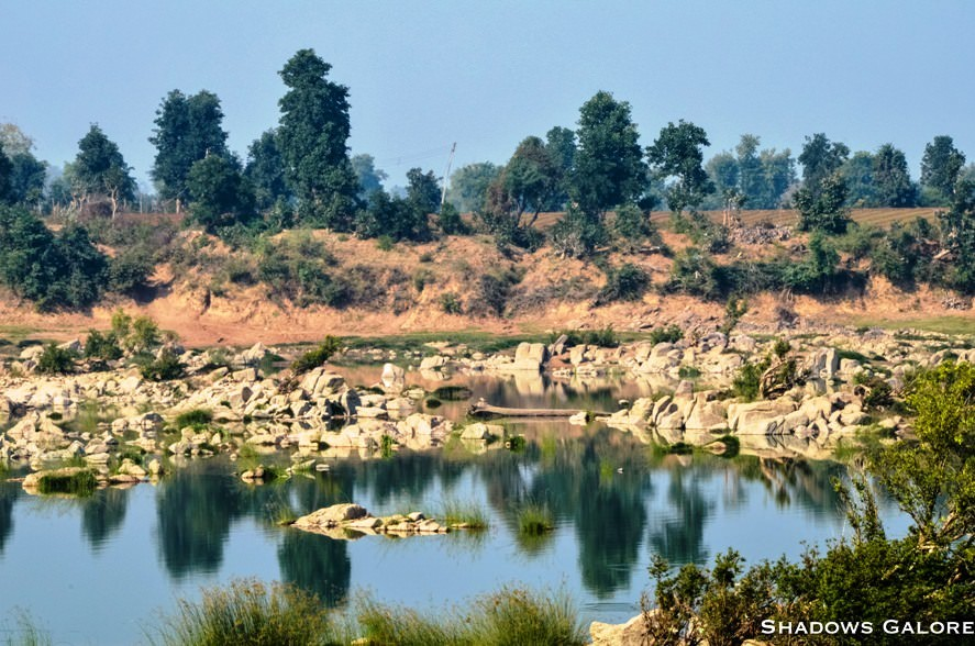A Diary From The Jungles Of Panna 5