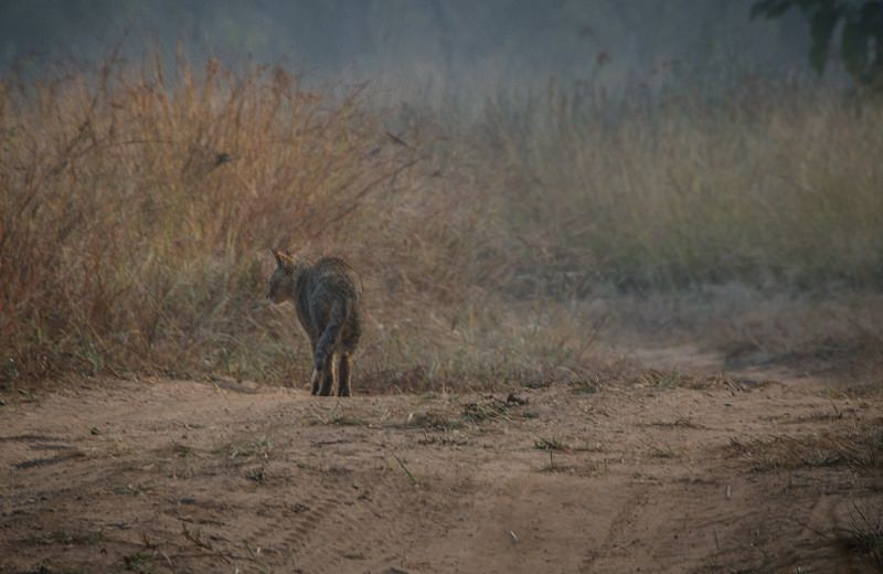 A Diary From The Jungles Of Panna 15
