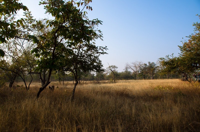 A Diary From The Jungles Of Panna 12