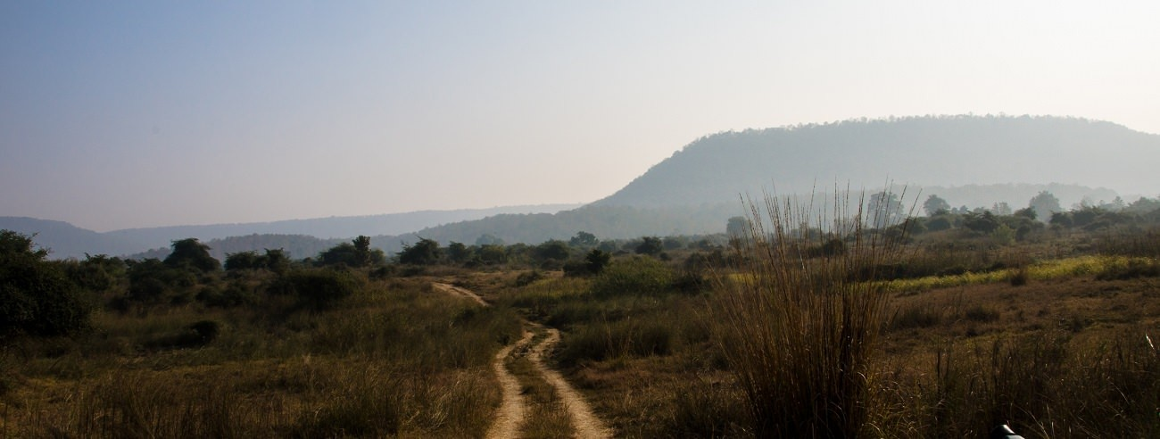 A Diary From The Jungles Of Panna 11