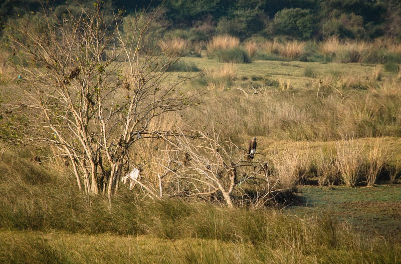 A Diary From The Jungles Of Panna 20