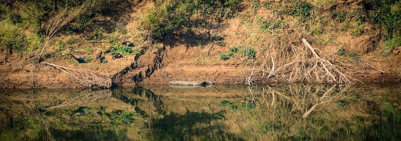 A Diary From The Jungles Of Panna 14
