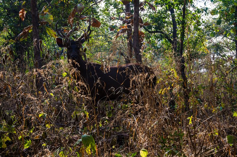 A Diary From The Jungles Of Panna 19