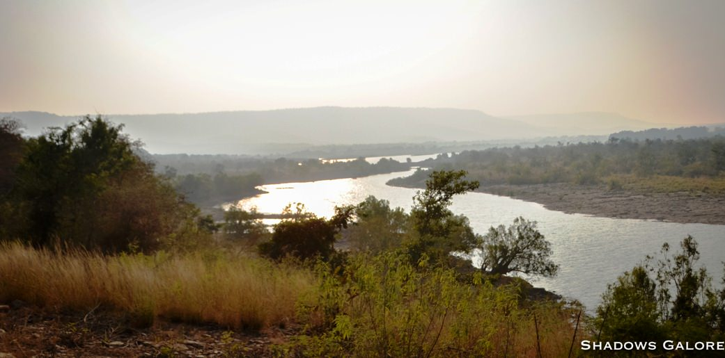 A Diary From The Jungles Of Panna 1