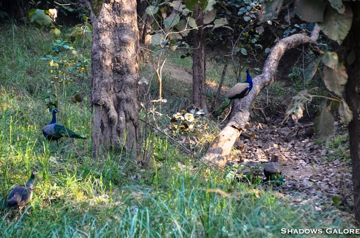 A Diary From The Jungles Of Panna 7