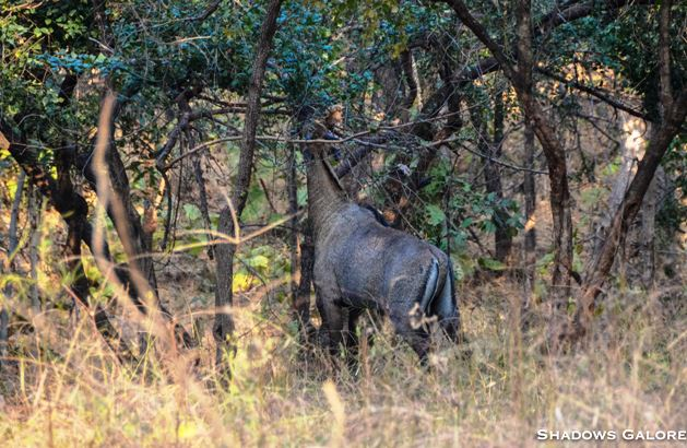 A Diary From The Jungles Of Panna 8
