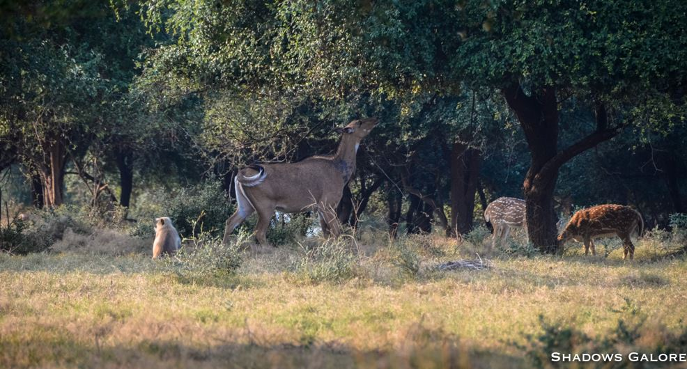 A Diary From The Jungles Of Panna 6