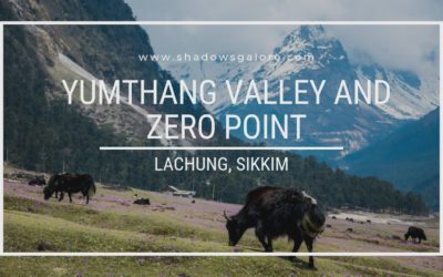 A Road Trip To Yumthang Valley and Zero Point