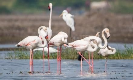 A Trip To Bhigwan Bird Sanctuary