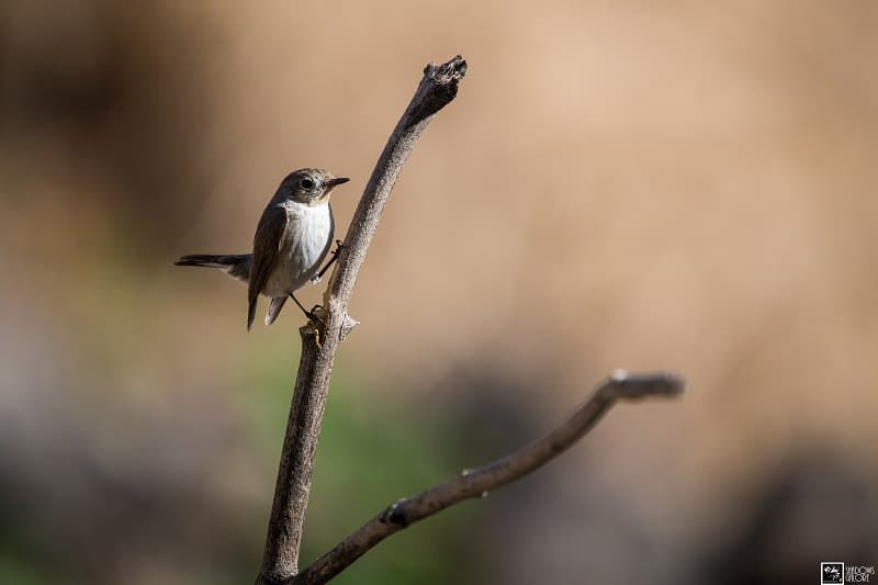 The Birds Of Sinhagad Valley